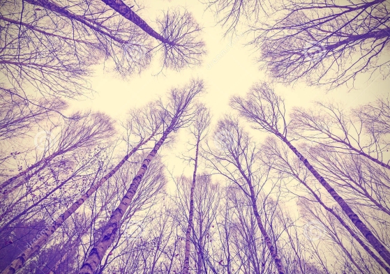 looking-up-leafless-trees-retro-filtered-background-48126775 copy